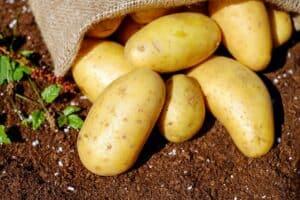 Potato from Qualabear